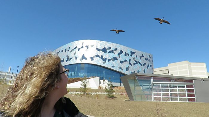 Woman stares at geese flying over York University campus.